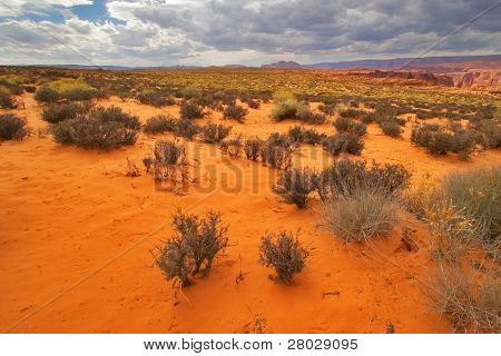 The red desert covered by dry bushes, in state of Utah in the USA