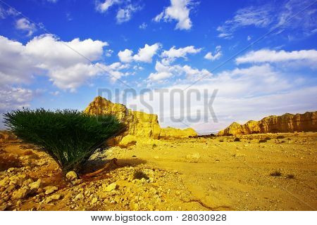 Stone desert and the tree blossoming in droughty areas