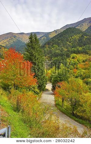 Brightly painted woods in the French Alps and road among them