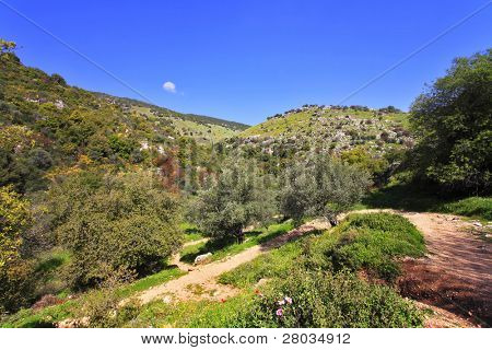 Footpath in low mountains. The north of Israel, mountain Meron