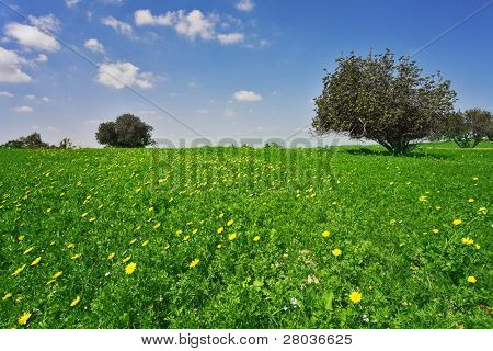 Midday on blossoming hills of hot coast of Mediterranean sea - a grass, flowers and trees
