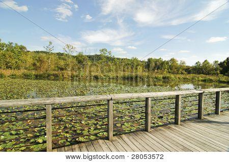 beaver marsh and moss bog