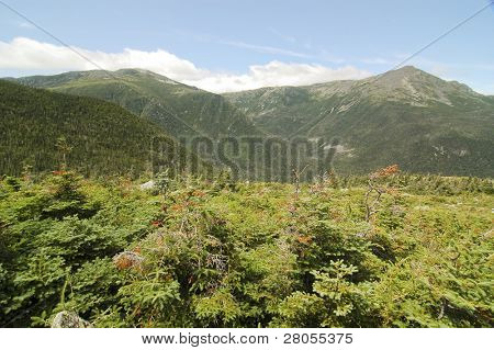 rocky mountain and shrubs