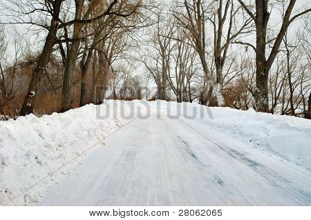 snow on a road lined with trees