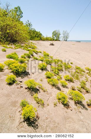 beachfront plants
