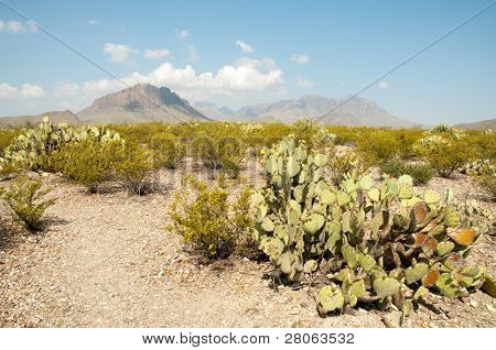 desert landscape, chisos mountains and prickly pear cactus