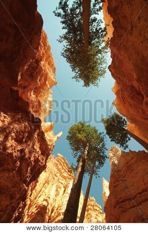 orange hoodoo canyon and tree trunks