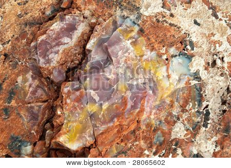 colorful petrified wood detail