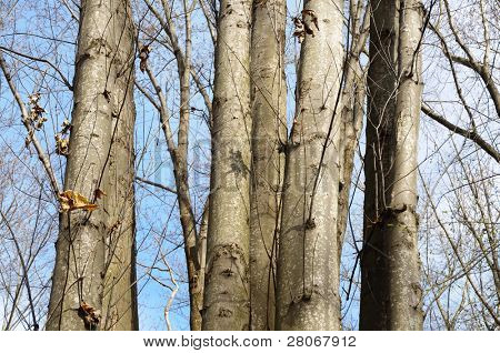 tree trunks and bare branches