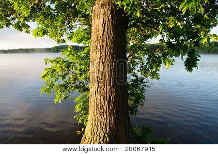 tree trunk and green leaves beside a lake