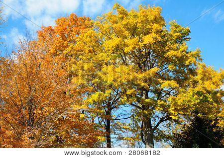 orange and yellow leaves
