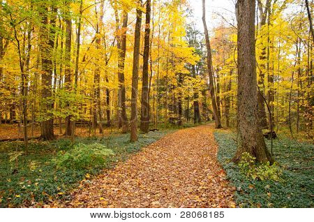 trail covered in leaves in fall