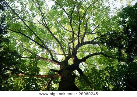 black tree trunk and green leaves