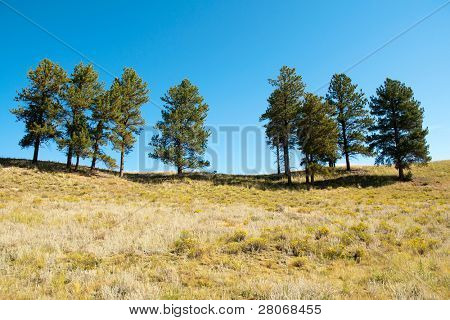 sporadic trees