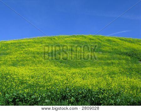 Where Mustard Hits The Sky