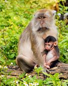 Mama Macaque Holding Baby poster