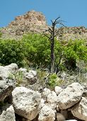 foto of stagecoach  - Tejas Canyon rocky mountain and dead tree - JPG