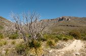 pic of stagecoach  - dead tree and mckittrick canyon mountains - JPG