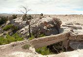foto of paleozoic  - Agate Bridge - JPG