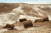 stock photo of paleozoic  - painted desert landscape and petrified wood - JPG