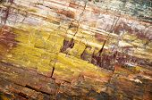 picture of paleozoic  - colorful petrified wood detail - JPG