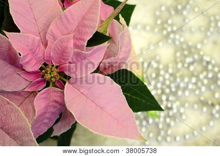 Christmas Star...