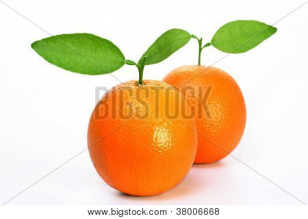 Ripe Oranges's