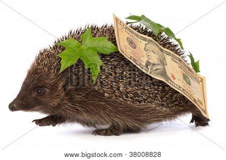 Igel mit Dollar Gewinn