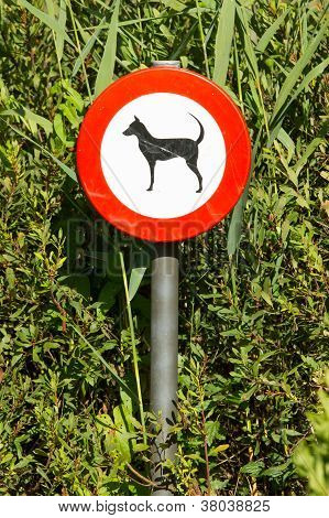 Old Damaged Sign In The Bushes - Dogs Forbidden