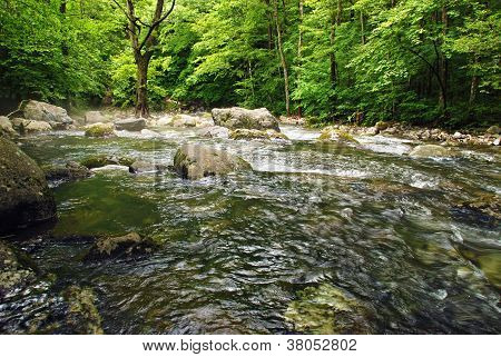 Forest River
