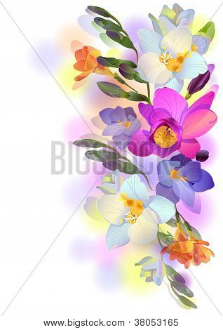 Vector Background With Gentle Freesia Flowers And Branches