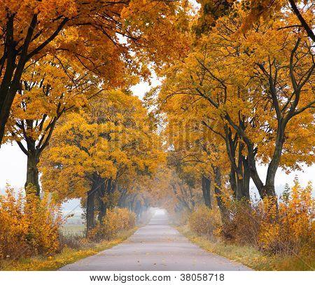 Fall road.