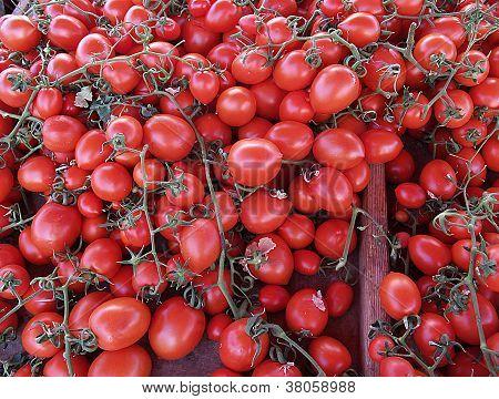 Cretan tomatoes