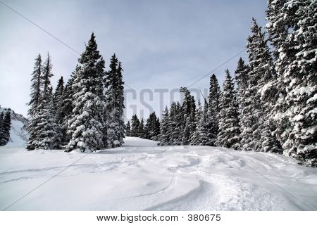 Ski Tracks In Fresh Powder