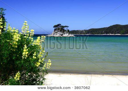 Golden Beach Abel Tasman