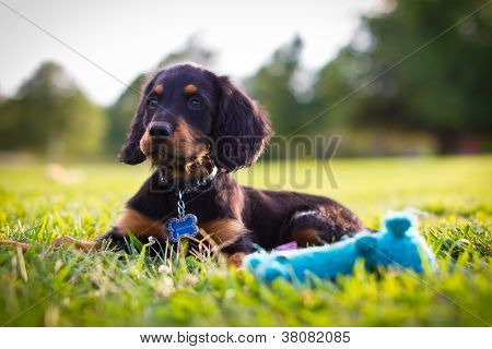 Puppy with blue squeak toy