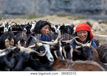 Tibetan nomad with goats
