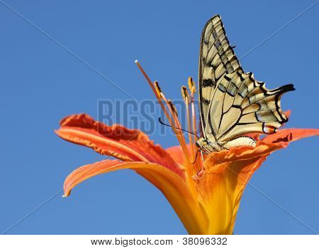 Butterfly Sitting On Lily Over Blue Sky