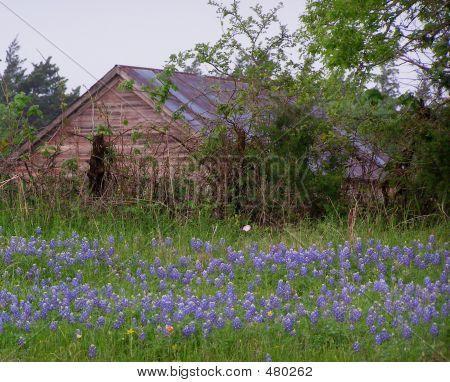 Texas rústico granero