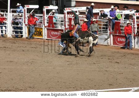 Cowboy Trying To Ride A Wild Bull