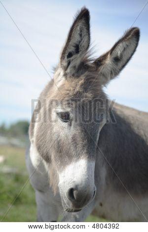 Artful Sad Donkey