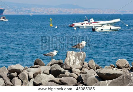 Seagulls On The Rocks In Naples