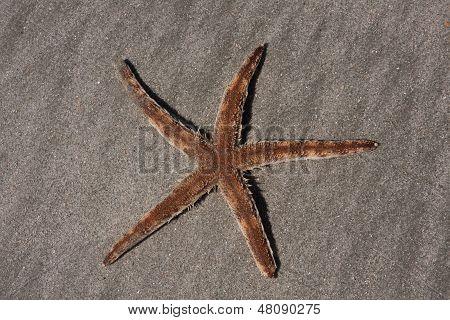 Living Starfish