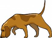picture of dog footprint  - Bloodhound dog on a white background vector illustration - JPG