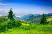 stock photo of blue spruce  - two green pine tree and bush on a green meadow in the mountains in the early morning under a clear blue sky - JPG