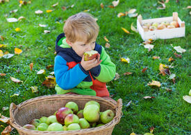 foto of crip  - Adorable little boy eating apple in autumn garden - JPG