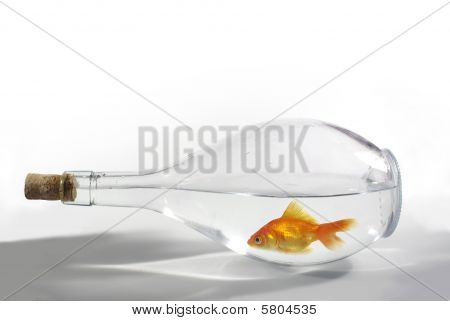 Fish In Bottle