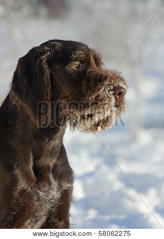 Brown Dog Portrait Against The Snow