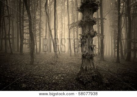 Dark woods with fog and strange tree