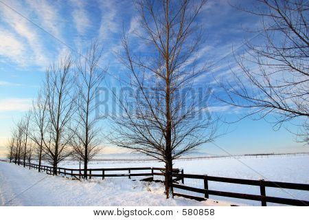 Rathdrum Prairie In Winter